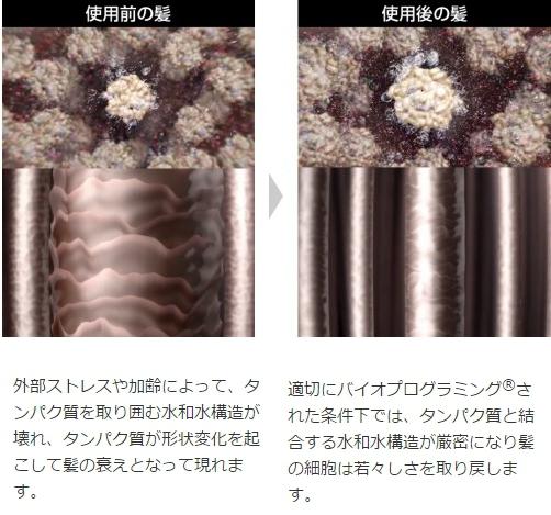 バイオプログラミングによる髪質の変化 外部ストレスや加齢によって、タンパク質を取り囲む水和水構造が壊れ、タンパク質が形状変化を起こして髪の衰えとなって現れます。 適切にバイオプログラミング®された条件下では、タンパク質と結合する水和水構造が厳密になり髪の細胞は若々しさを取り戻します。